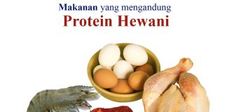 Protein Hewani Archives News Trends