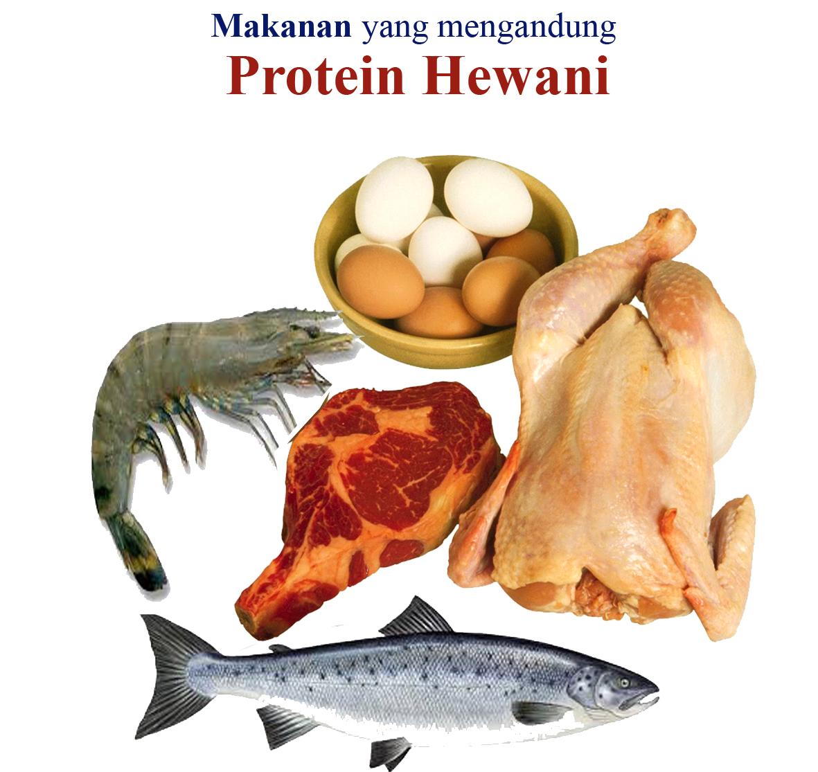 Hello Makan Lebih Banyak Protein Hewani Tidak Selalu Baik News
