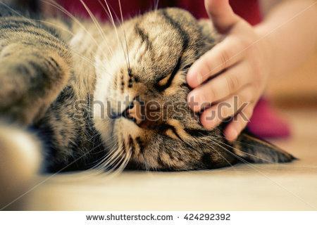 kucing-dipegang-kepalanya